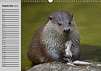 Seehunde und Otter. Putzige Gesellen, perfekte Schwimmer (Wandkalender 2019 DIN A3 quer) - Produktdetailbild 9