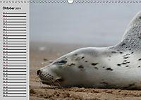 Seehunde und Otter. Putzige Gesellen, perfekte Schwimmer (Wandkalender 2019 DIN A3 quer) - Produktdetailbild 10
