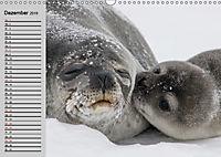 Seehunde und Otter. Putzige Gesellen, perfekte Schwimmer (Wandkalender 2019 DIN A3 quer) - Produktdetailbild 12