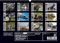 Seehunde und Otter. Putzige Gesellen, perfekte Schwimmer (Wandkalender 2019 DIN A3 quer) - Produktdetailbild 13