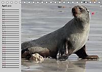 Seehunde und Otter. Putzige Gesellen, perfekte Schwimmer (Tischkalender 2019 DIN A5 quer) - Produktdetailbild 4