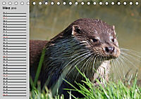 Seehunde und Otter. Putzige Gesellen, perfekte Schwimmer (Tischkalender 2019 DIN A5 quer) - Produktdetailbild 3