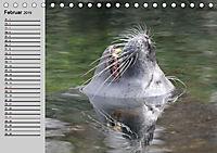 Seehunde und Otter. Putzige Gesellen, perfekte Schwimmer (Tischkalender 2019 DIN A5 quer) - Produktdetailbild 2