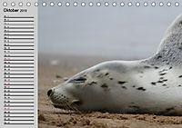 Seehunde und Otter. Putzige Gesellen, perfekte Schwimmer (Tischkalender 2019 DIN A5 quer) - Produktdetailbild 10