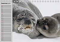 Seehunde und Otter. Putzige Gesellen, perfekte Schwimmer (Tischkalender 2019 DIN A5 quer) - Produktdetailbild 12