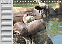 Seehunde und Otter. Putzige Gesellen, perfekte Schwimmer (Tischkalender 2019 DIN A5 quer) - Produktdetailbild 11