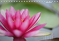 SeerosenWelt (Tischkalender 2019 DIN A5 quer) - Produktdetailbild 6