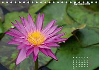 SeerosenWelt (Tischkalender 2019 DIN A5 quer) - Produktdetailbild 9