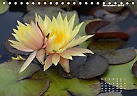 SeerosenWelt (Tischkalender 2019 DIN A5 quer) - Produktdetailbild 11