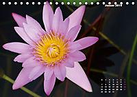 SeerosenWelt (Tischkalender 2019 DIN A5 quer) - Produktdetailbild 1