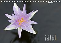 SeerosenWelt (Tischkalender 2019 DIN A5 quer) - Produktdetailbild 5