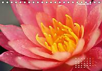 SeerosenWelt (Tischkalender 2019 DIN A5 quer) - Produktdetailbild 2