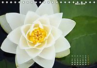 SeerosenWelt (Tischkalender 2019 DIN A5 quer) - Produktdetailbild 3
