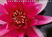 SeerosenWelt (Tischkalender 2019 DIN A5 quer) - Produktdetailbild 10