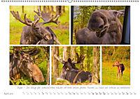 Sehnsucht Schweden - Elche, Natur und Urlaubsträume (Wandkalender 2019 DIN A2 quer) - Produktdetailbild 4