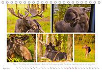 Sehnsucht Schweden - Elche, Natur und Urlaubsträume (Tischkalender 2019 DIN A5 quer) - Produktdetailbild 4