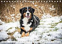 Sennenhund Rassen (Tischkalender 2019 DIN A5 quer) - Produktdetailbild 2