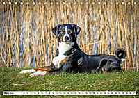 Sennenhund Rassen (Tischkalender 2019 DIN A5 quer) - Produktdetailbild 3