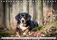 Sennenhund Rassen (Tischkalender 2019 DIN A5 quer) - Produktdetailbild 8