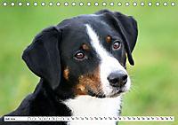 Sennenhund Rassen (Tischkalender 2019 DIN A5 quer) - Produktdetailbild 7