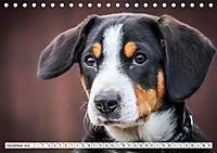 Sennenhund Rassen (Tischkalender 2019 DIN A5 quer) - Produktdetailbild 12