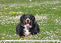 Sennenhund Rassen (Wandkalender 2019 DIN A2 quer) - Produktdetailbild 6