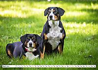 Sennenhund Rassen (Wandkalender 2019 DIN A2 quer) - Produktdetailbild 4