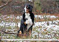 Sennenhund Rassen (Wandkalender 2019 DIN A2 quer) - Produktdetailbild 1