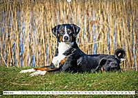 Sennenhund Rassen (Wandkalender 2019 DIN A2 quer) - Produktdetailbild 3