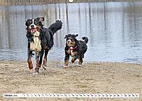 Sennenhund Rassen (Wandkalender 2019 DIN A2 quer) - Produktdetailbild 10