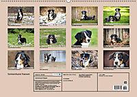 Sennenhund Rassen (Wandkalender 2019 DIN A2 quer) - Produktdetailbild 13