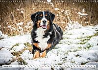 Sennenhund Rassen (Wandkalender 2019 DIN A3 quer) - Produktdetailbild 2