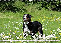 Sennenhund Rassen (Wandkalender 2019 DIN A3 quer) - Produktdetailbild 5