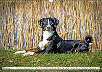 Sennenhund Rassen (Wandkalender 2019 DIN A3 quer) - Produktdetailbild 3