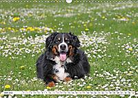 Sennenhund Rassen (Wandkalender 2019 DIN A3 quer) - Produktdetailbild 6
