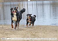 Sennenhund Rassen (Wandkalender 2019 DIN A3 quer) - Produktdetailbild 10