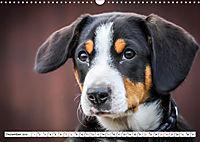 Sennenhund Rassen (Wandkalender 2019 DIN A3 quer) - Produktdetailbild 12