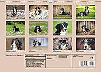 Sennenhund Rassen (Wandkalender 2019 DIN A3 quer) - Produktdetailbild 13