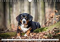 Sennenhund Rassen (Wandkalender 2019 DIN A4 quer) - Produktdetailbild 8