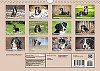 Sennenhund Rassen (Wandkalender 2019 DIN A4 quer) - Produktdetailbild 13