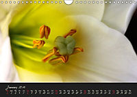 Serenade Visual Music of Flowers (Wall Calendar 2019 DIN A4 Landscape) - Produktdetailbild 1