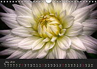 Serenade Visual Music of Flowers (Wall Calendar 2019 DIN A4 Landscape) - Produktdetailbild 7