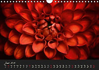 Serenade Visual Music of Flowers (Wall Calendar 2019 DIN A4 Landscape) - Produktdetailbild 6