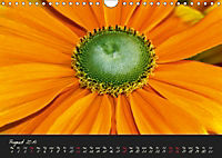 Serenade Visual Music of Flowers (Wall Calendar 2019 DIN A4 Landscape) - Produktdetailbild 8