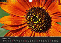 Serenade Visual Music of Flowers (Wall Calendar 2019 DIN A4 Landscape) - Produktdetailbild 10