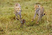 Serengeti - Produktdetailbild 7
