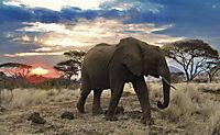 Serengeti - Produktdetailbild 2