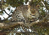 Serengeti - Produktdetailbild 10