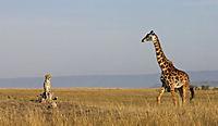 Serengeti - Produktdetailbild 3