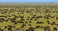 Serengeti - Produktdetailbild 9